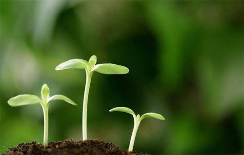 合理施用微生物菌肥时应注意的要点知识总结