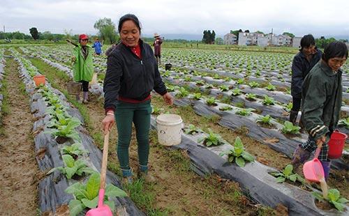 全面认识化肥的作用、转变施肥方式,成为绿色农业发展的关键